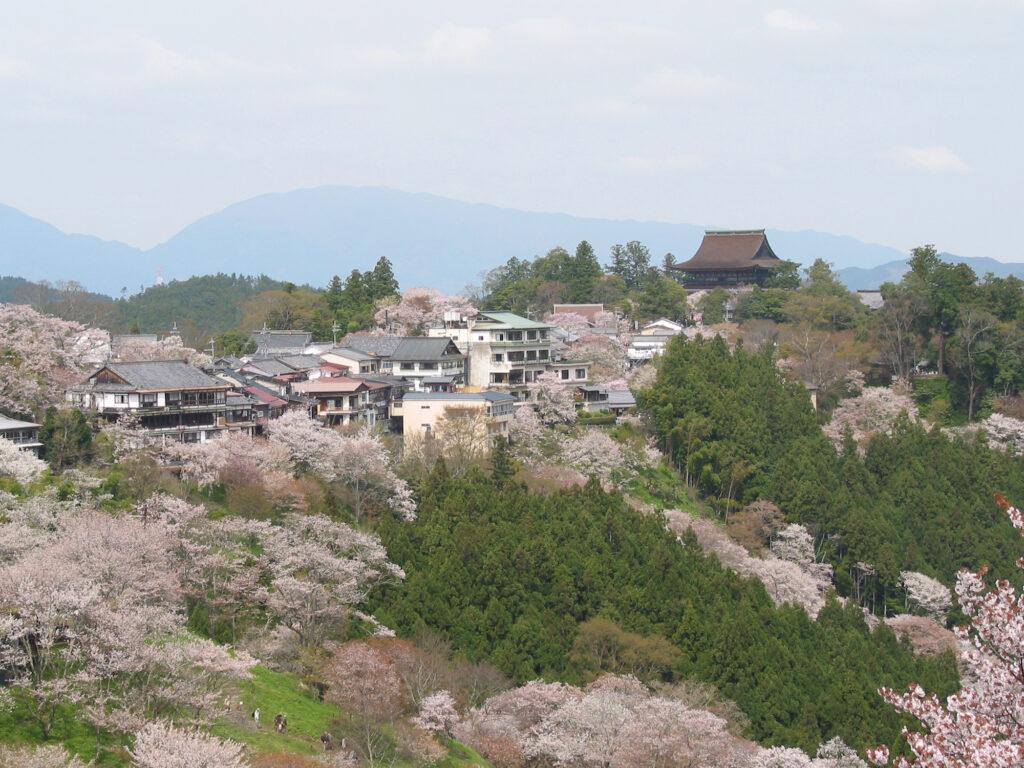 Cherry blossoms at Yoshinoyama (Wikimedia Commons)