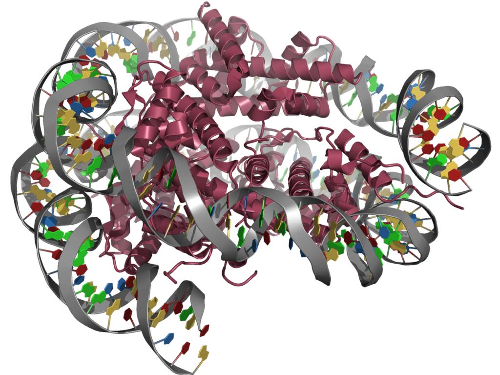 Struktur eines Nukleosoms mit Histonen der Fruchtfliege (Wikimedia Commons)